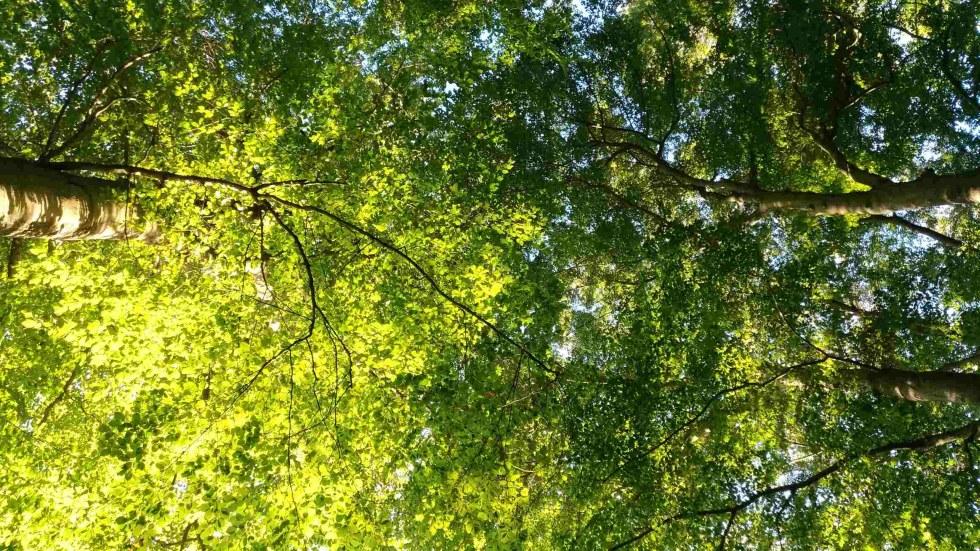 Roter Faden Coaching - Riskieren Sie einen Blick durchs Blätterdach